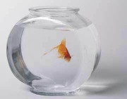 Image from http://www.ornamental-fishes.com/2009/07/requirements-for-ornamental-fish-bowl.html